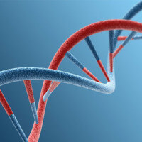 Gynécomastie héréditaire